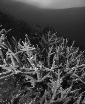 Stag Party on the Reef - BW