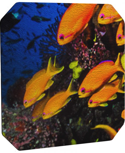 Anthias Scene Fish Scales